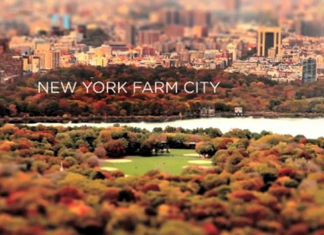 New York Farm City