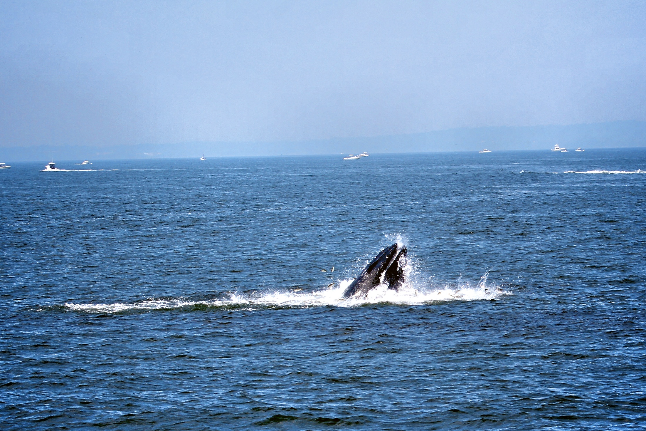 This excursion is really awesome. If you have time you should not miss it. (We are not getting any money from them…;-) ) More infos: http://big-apple.tv/2012/08/24/whale-watching-near-new-york/ Whale watching in Full Screen: http://big-apple.tv/whale-watching-fullscreen/