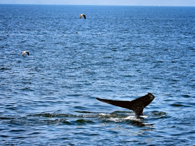 Whale watching near New York
